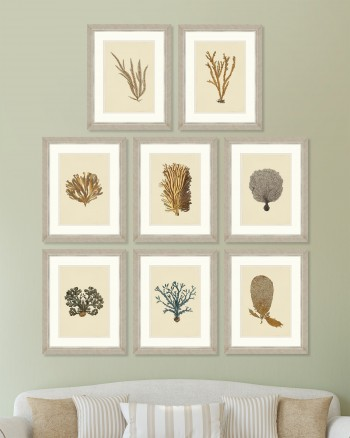 ALGA MARINA PLATES Set of 8 Framed art