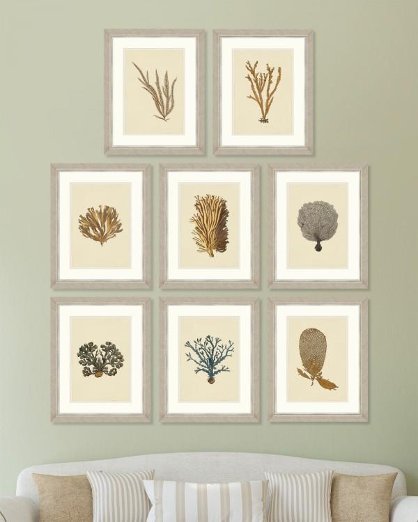 ALGA MARINA PLATES Set of 8 Framed art