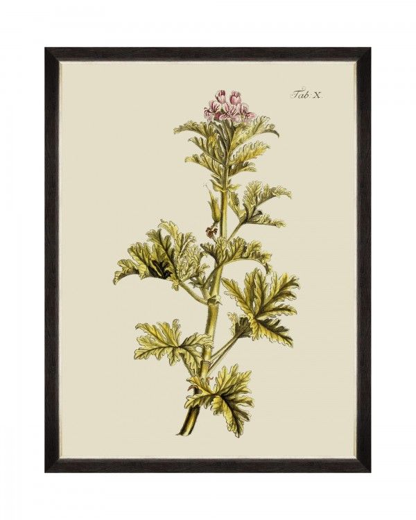 BOTANICAL II Framed Art
