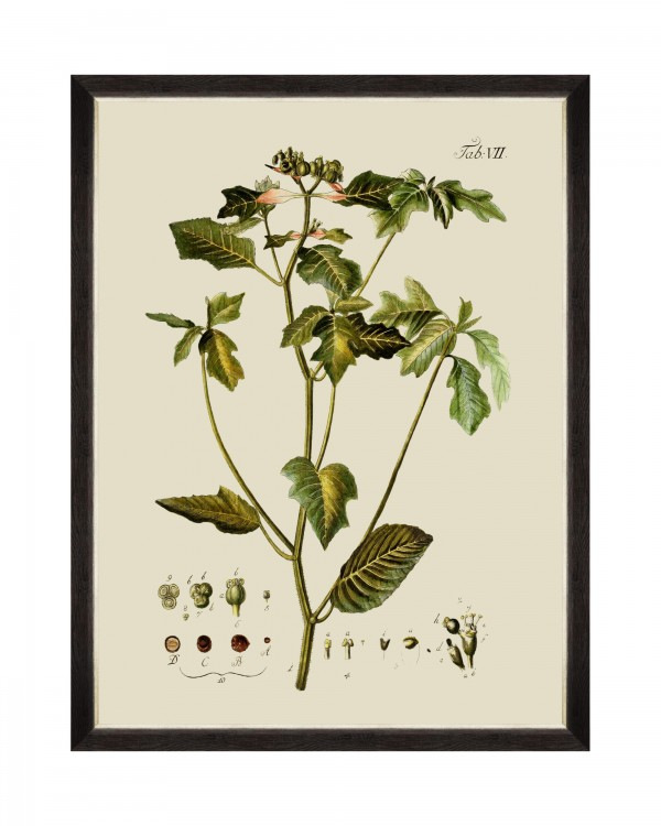 BOTANICAL IV Framed Art