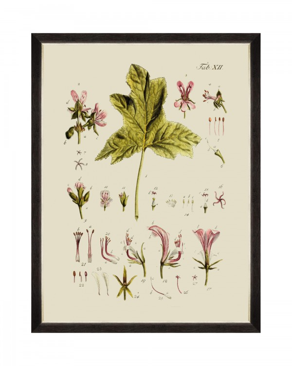 BOTANICAL V Framed Art