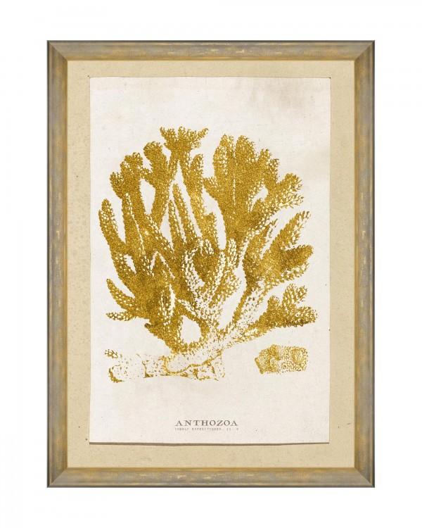 CARIBBEAN SEA LIFE - ANTHOZOA CORAL Framed Art