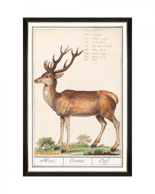 CERVUS Framed Art
