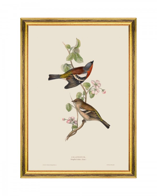 CHAFFINCH Framed Art