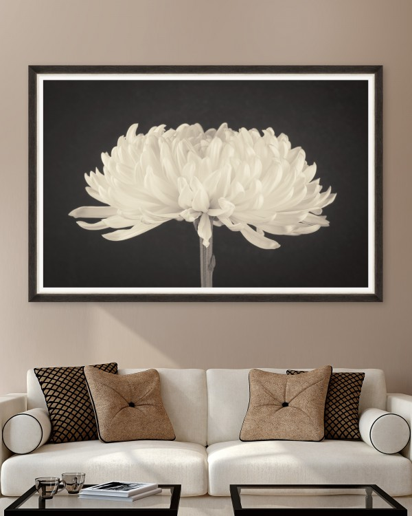 DAHLIA BLOSSOM Framed Art