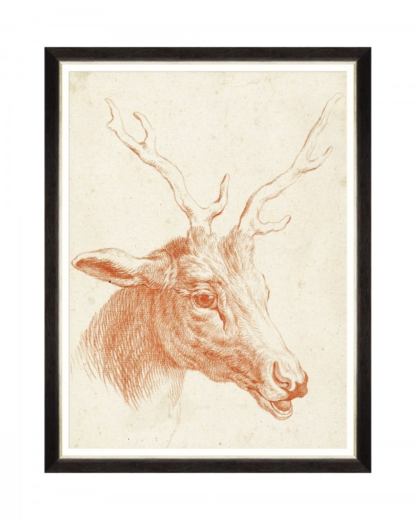 DEER HEAD Framed Art