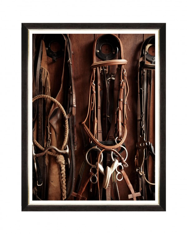EQUITATION IV Framed Art