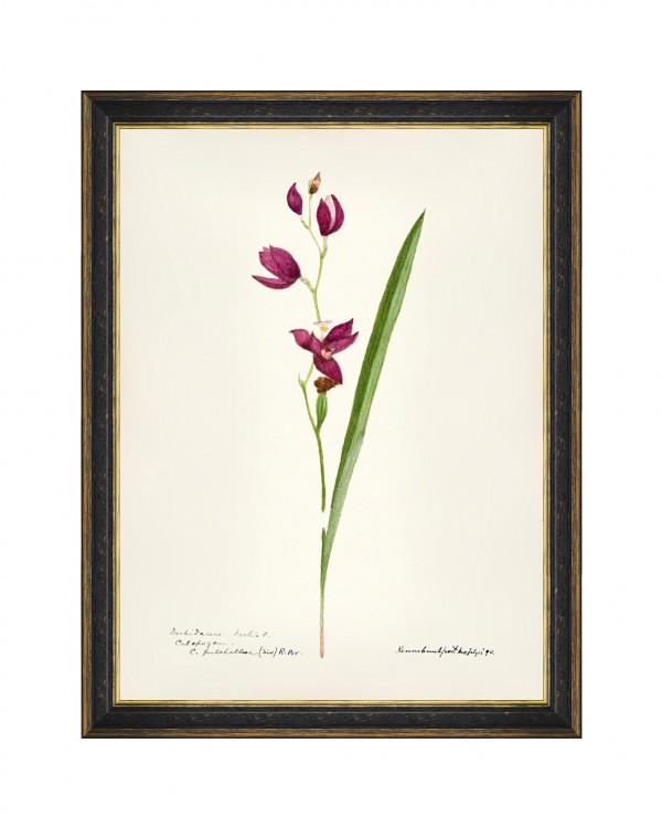 AQUAFLORA IX Framed Art