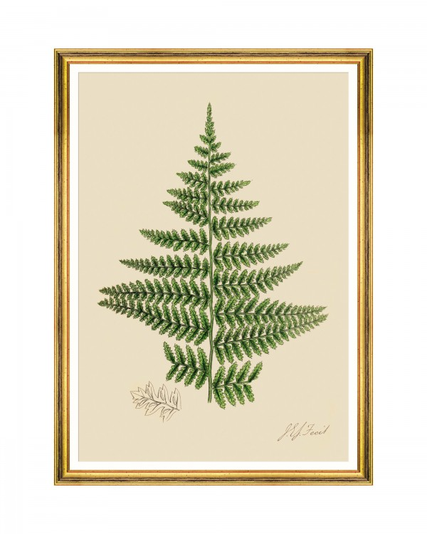 FERNS IV Framed Art