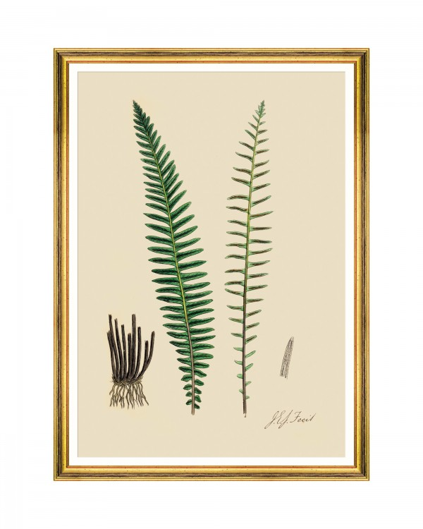 FERNS VI Framed Art
