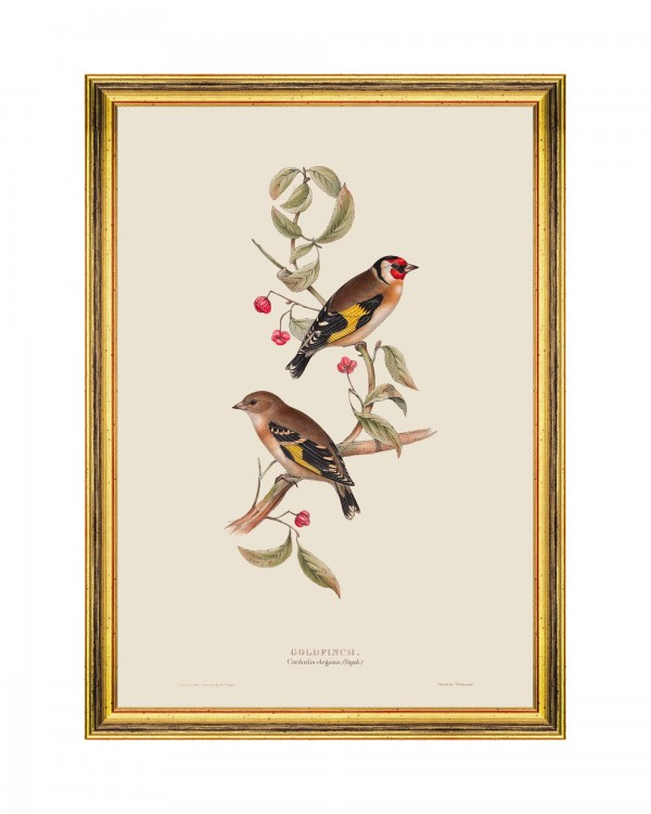 GOLDFINCH Framed Art