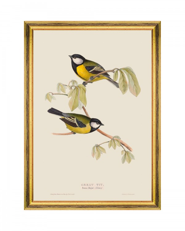 GREAT TIT Framed Art