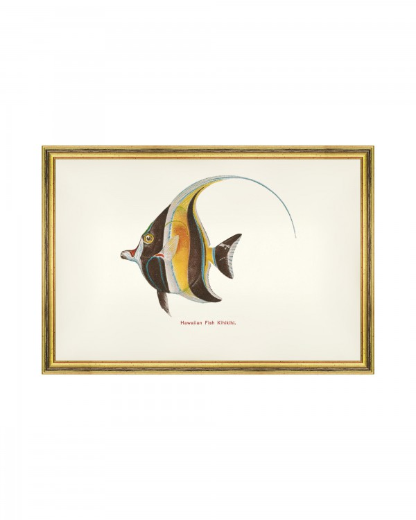 FISHES OF HAWAII - KIHIKIHI FISH Framed Art