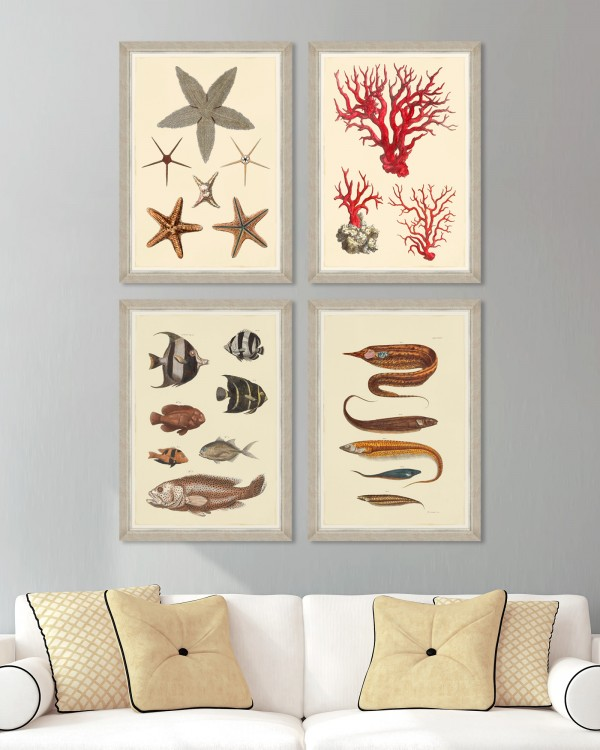MARINE LIFE PLATES Set of 4 Framed art