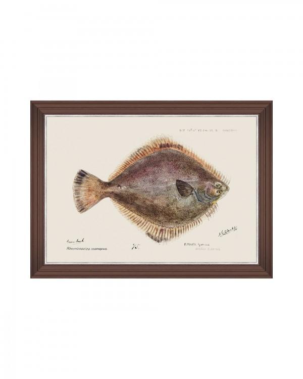 MEDITERRAEAN FISH - FLOUNDER by F Clark Framed Art