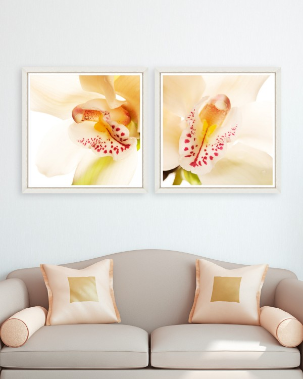 ORCHID CLOSE-UP Set of 2 Framed art