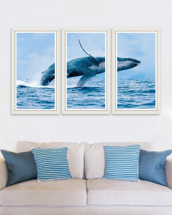 THE WHALE Triptic Framed Art