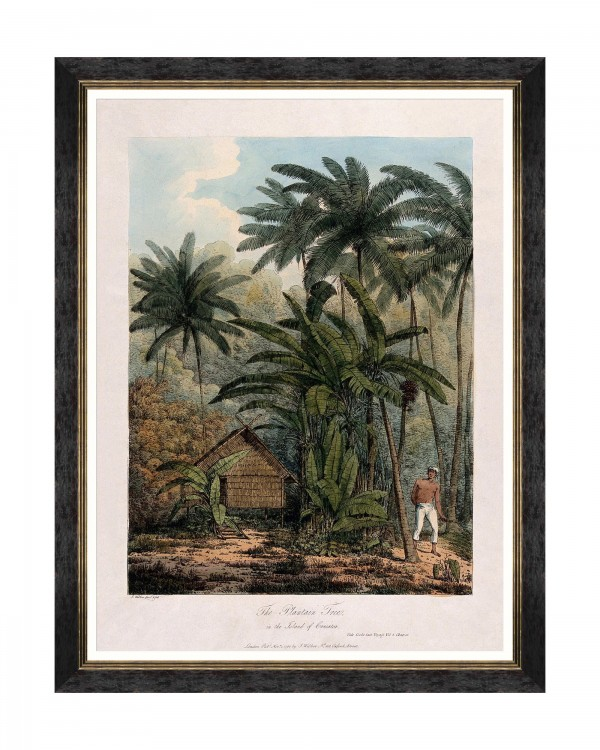 TREES OF KRAKATOA - THE PLANTAIN TREE Framed Art