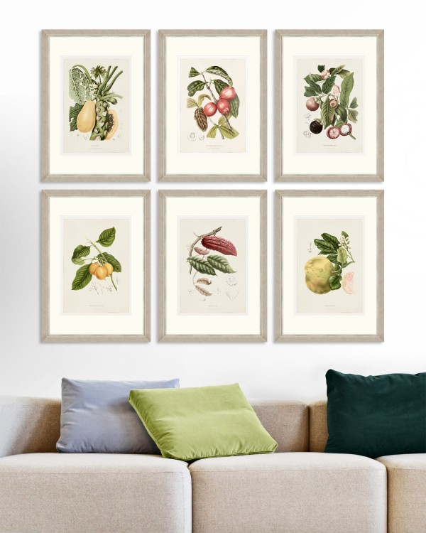 VINTAGE FRUIT PLATES Set of 6 Framed art