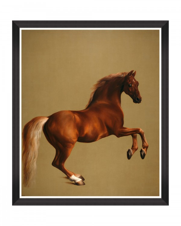 WHISTLEJACKET BY STUBB Framed Art