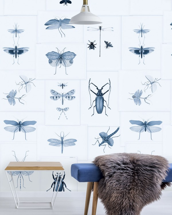 ENTOMOLOGY Blue