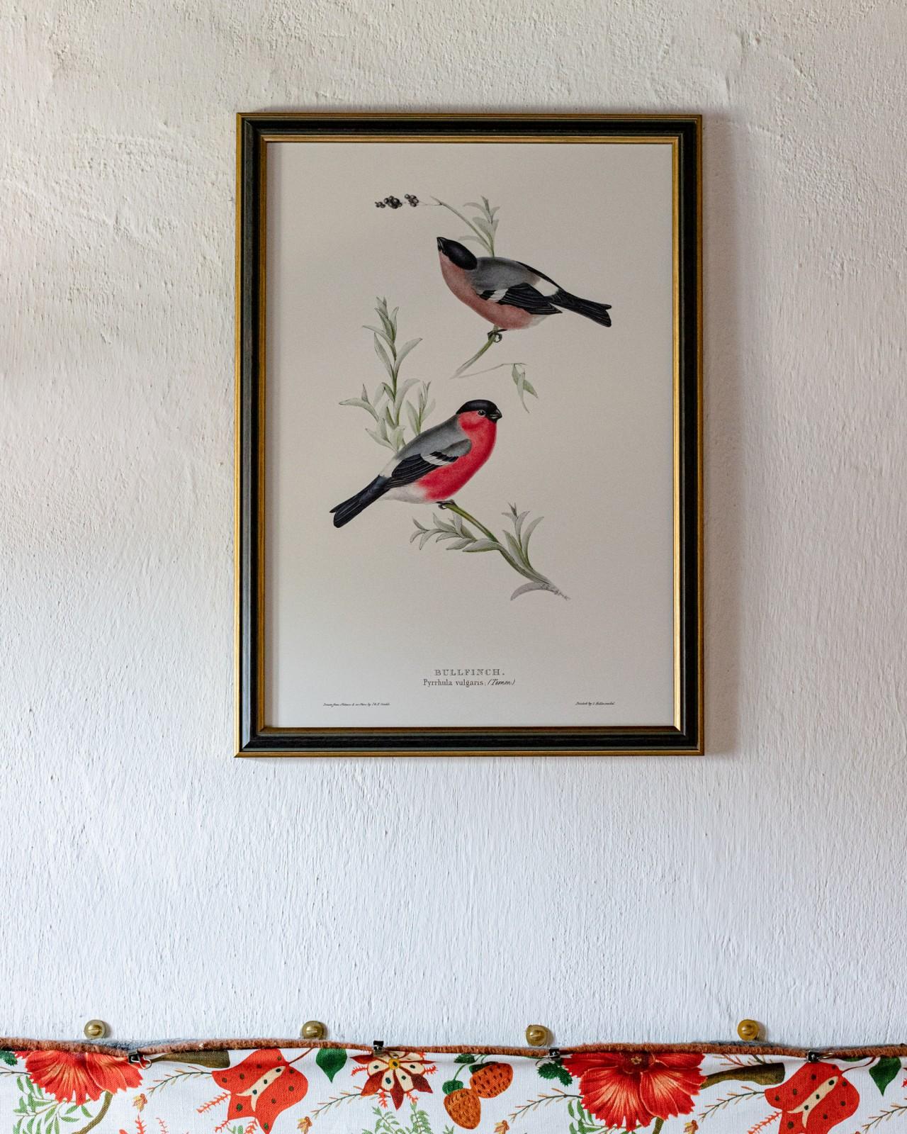 BULLFNCH Framed Art