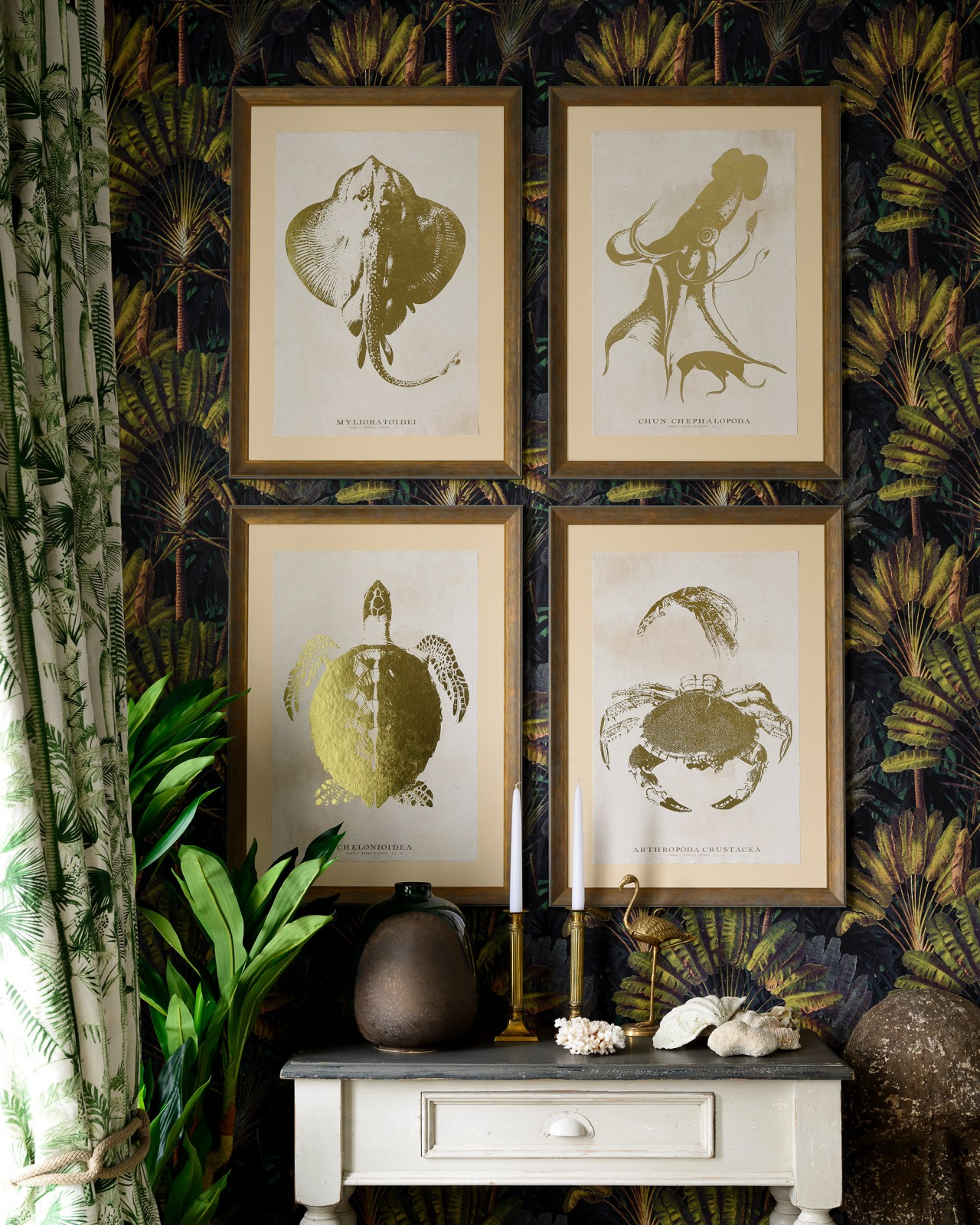 CARIBBEAN SEA LIFE - CEPHALAPODA Framed Art