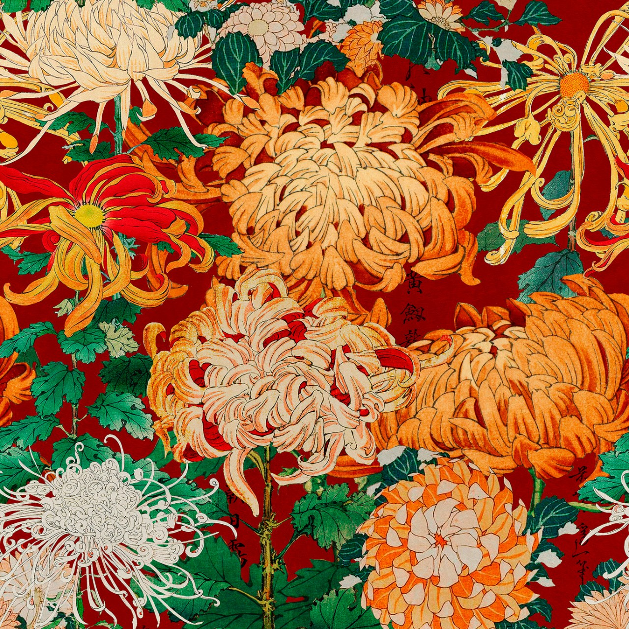 CHRYSANTHEMUMS Wallpaper