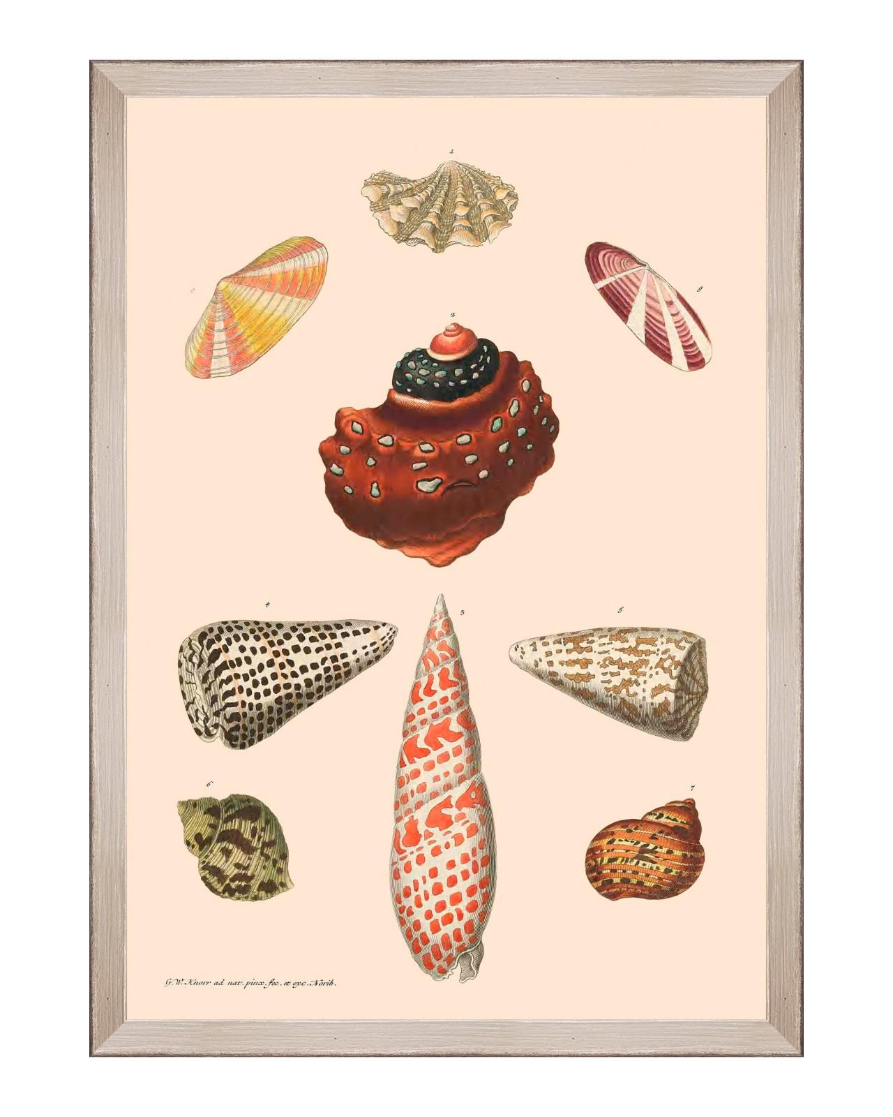 DELICIAE NATURAE VIII Framed Art