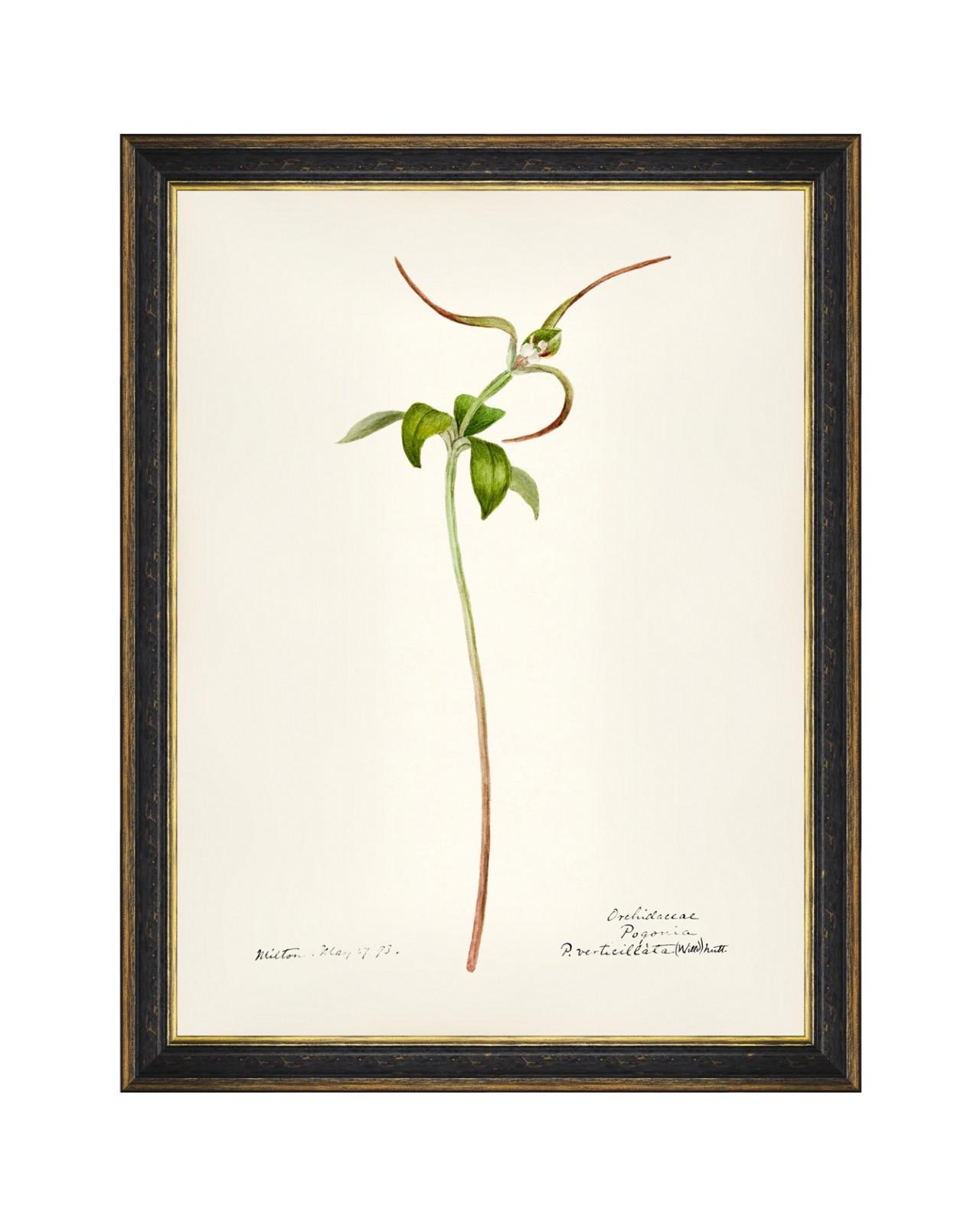 AQUAFLORA VIII Framed Art