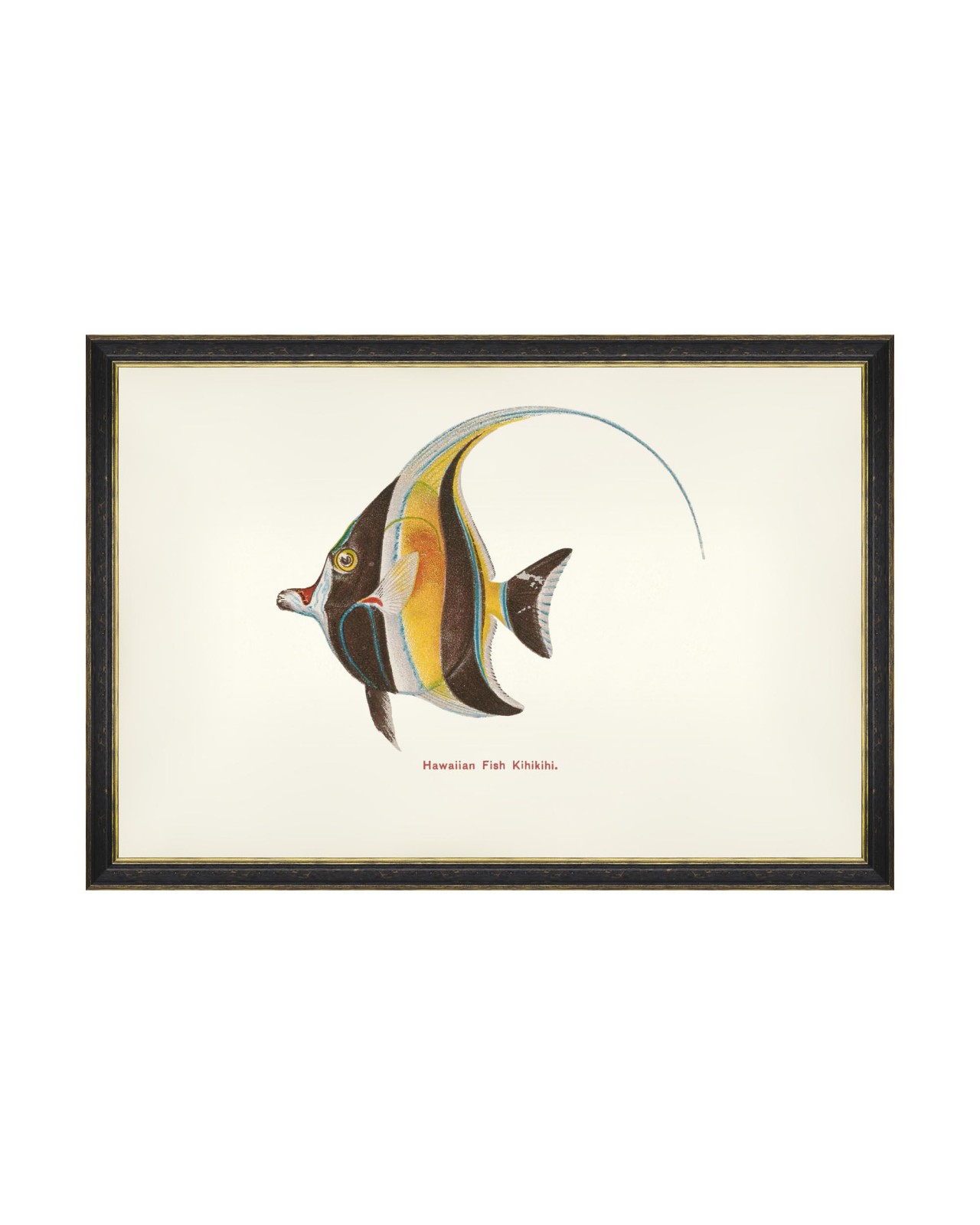 FISHES OF HAWAII - KIHIKIHI FISH Framed Art