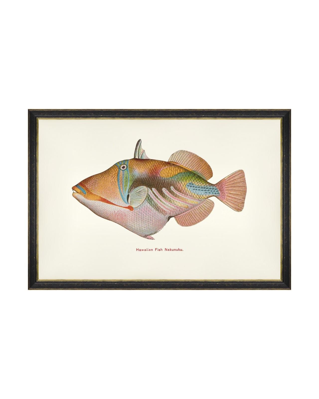 FISHES OF HAWAII - NAKUNUKU FISH Framed Art