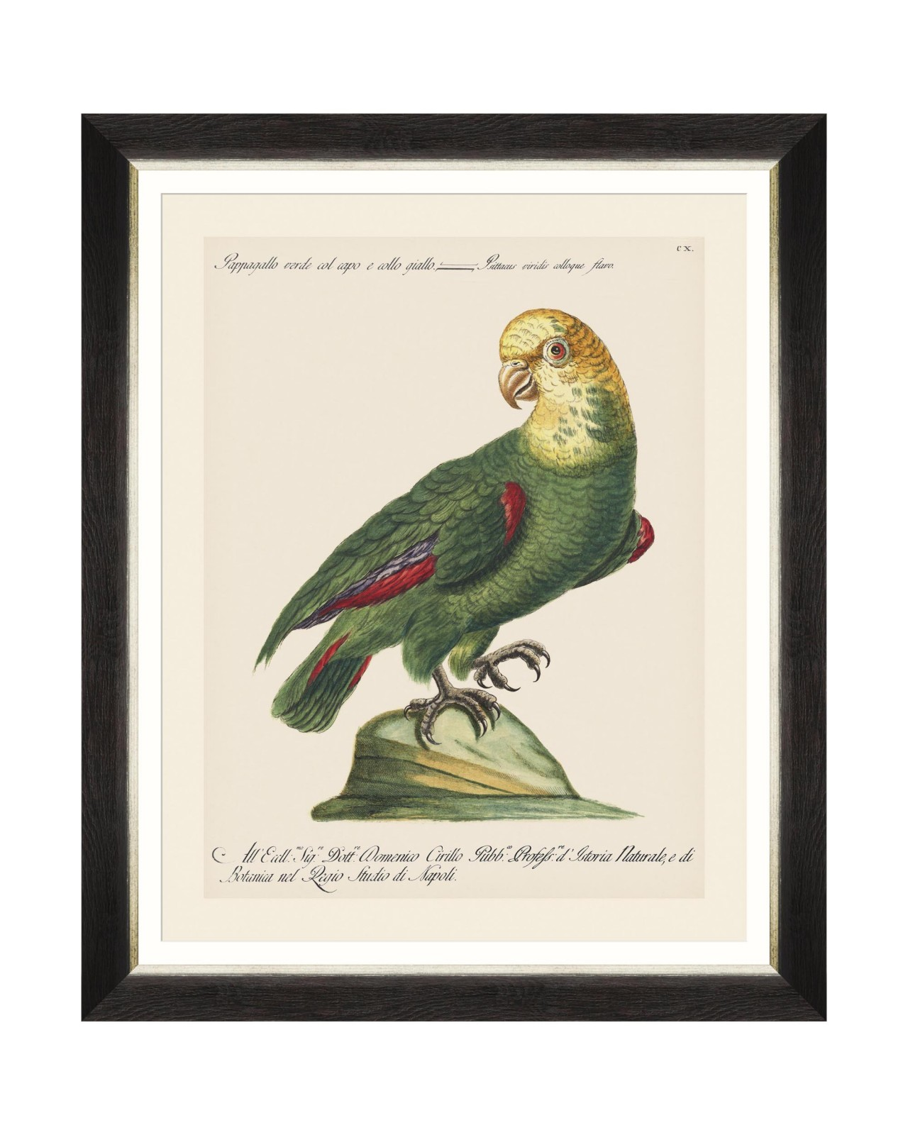 PARROTS OF BRAZIL V Framed Art