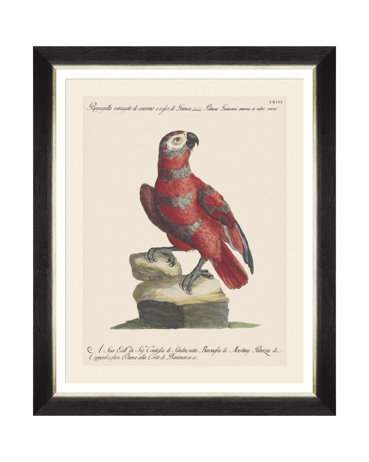 PARROTS OF BRAZIL X Framed Art