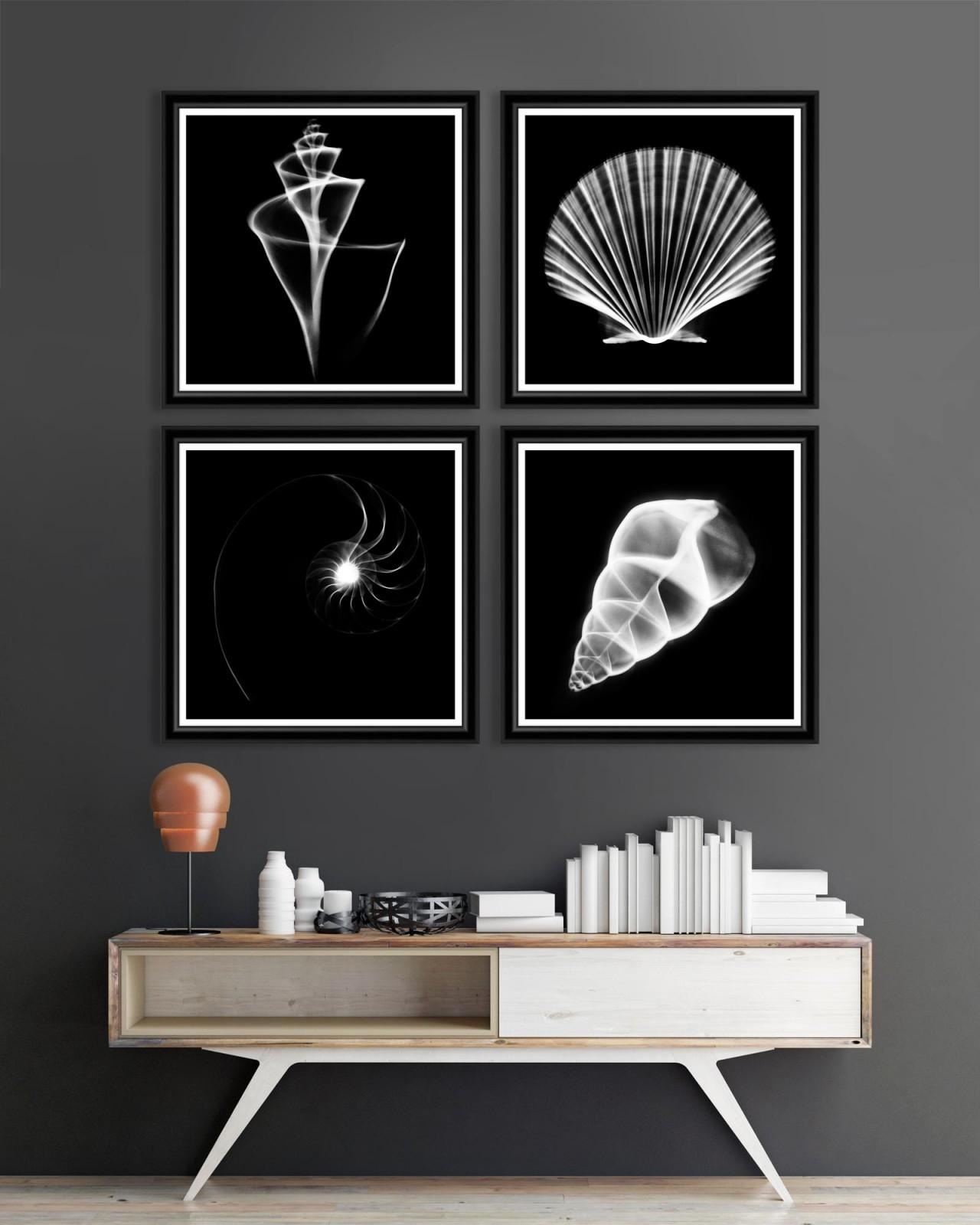 TRANSLUCENT SEA SPECIES Set of 4 Framed art
