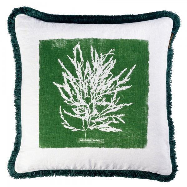 ALGAE I Cushion