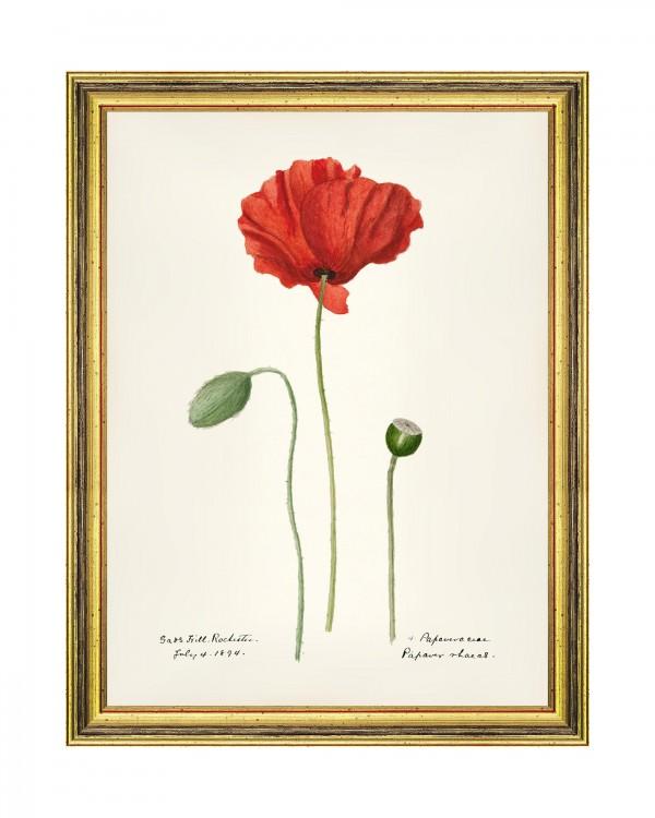AQUAFLORA V Framed Art