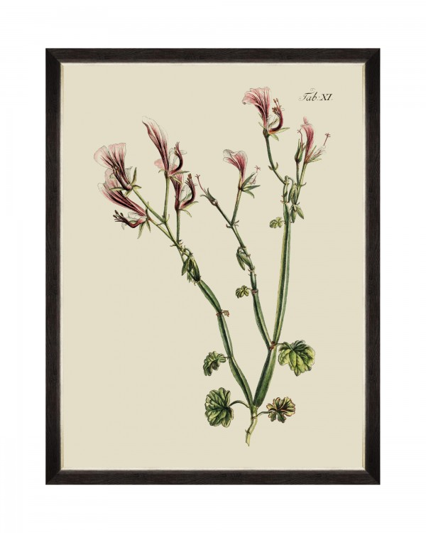 BOTANICAL I Framed Art
