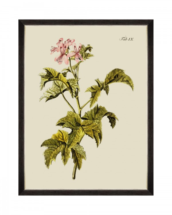 BOTANICAL III Framed Art