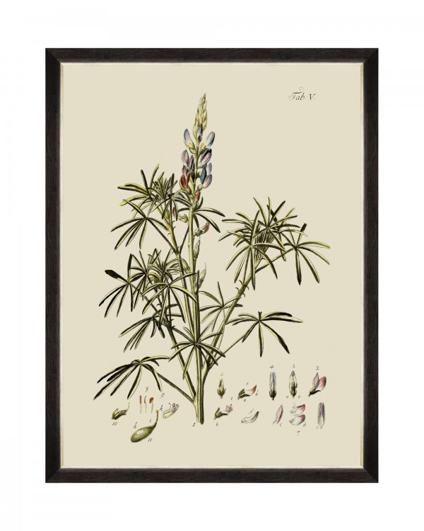 BOTANICAL VI Framed Art