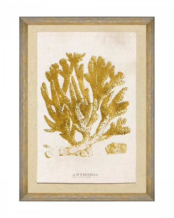 CARIBBEAN SEA LIFE - ANTHOZOA CORAL Framed Art