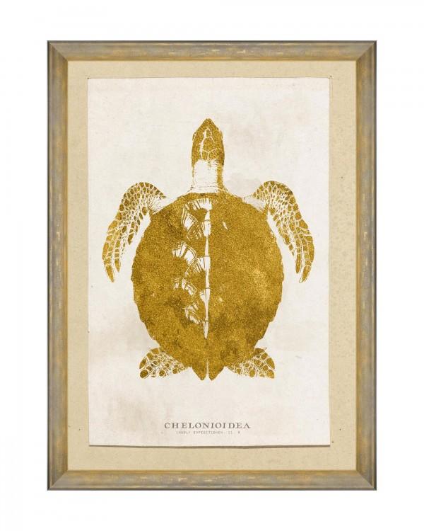CARIBBEAN SEA LIFE - CHELONIOIDEA Framed Art
