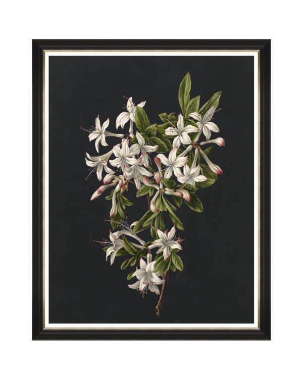 DELICATE BLOOM I Framed Art