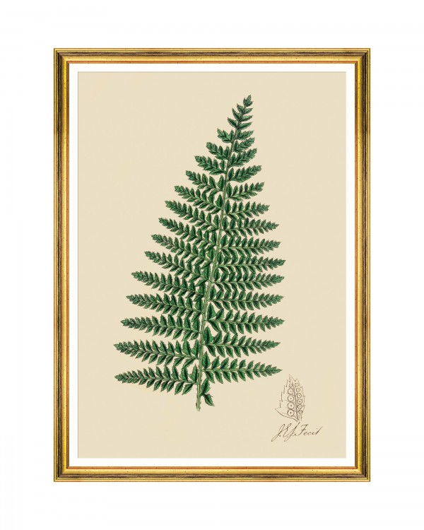 FERNS I Framed Art