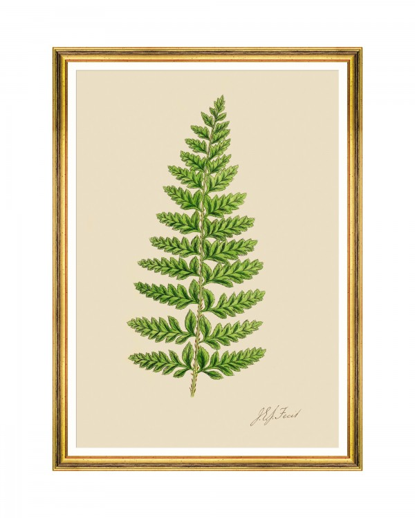 FERNS II Framed Art