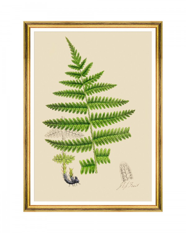 FERNS III Framed Art