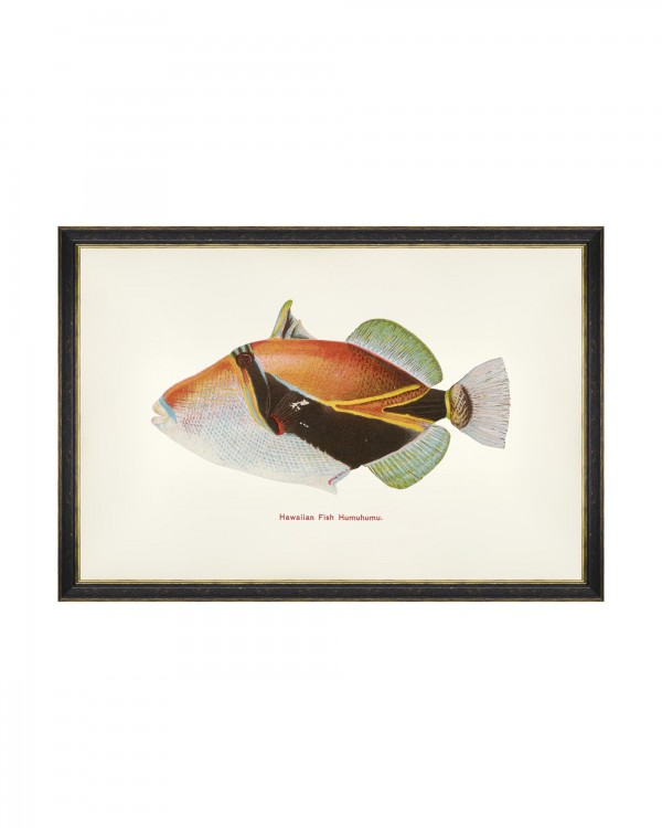 FISHES OF HAWAII - HUMUHUMU FISH Framed Art