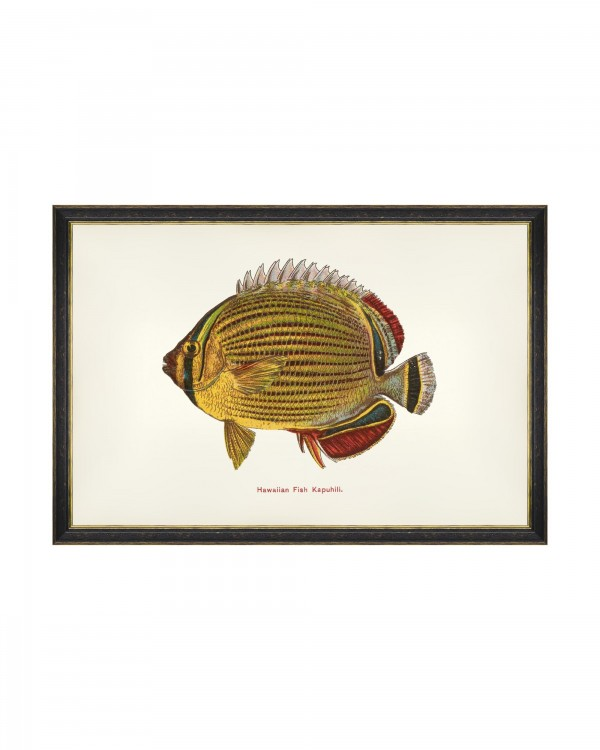 FISHES OF HAWAII - KAPUHILI FISH Framed Art