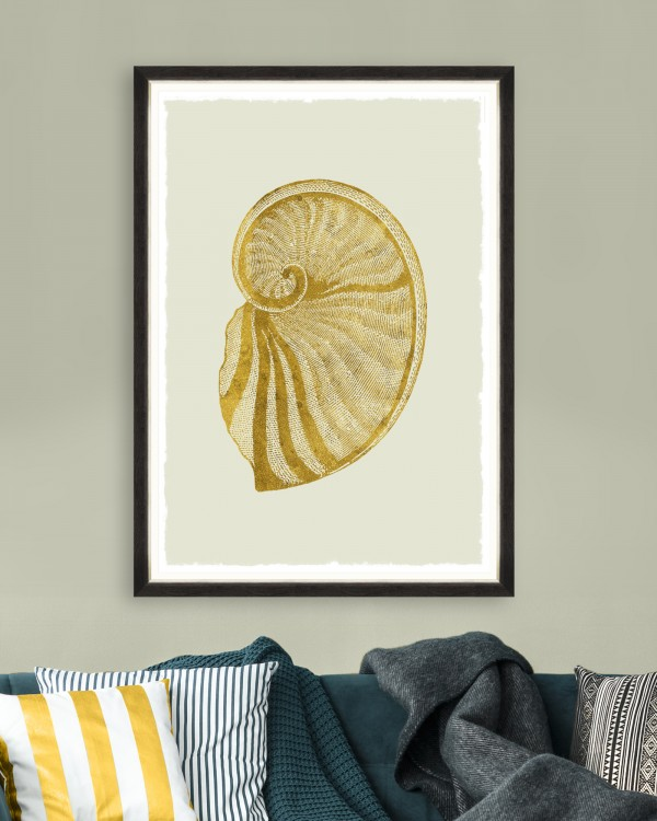 GOLDEN SEASHELL II Framed Art