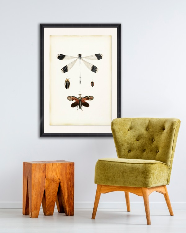 LIBELLULA Framed Art